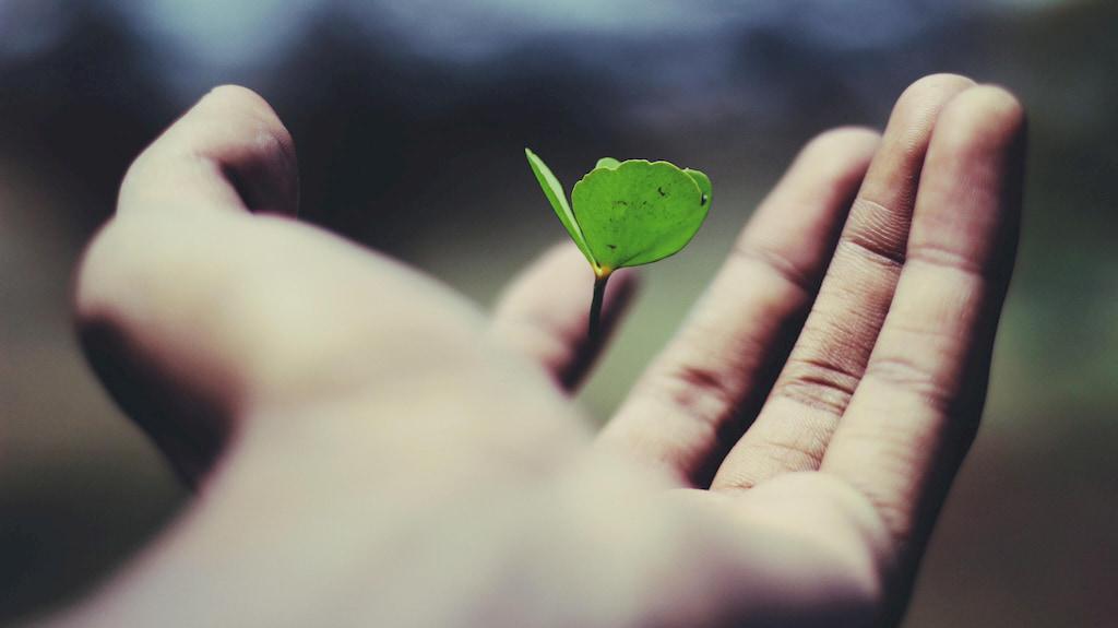 yeşil bitki tutan el