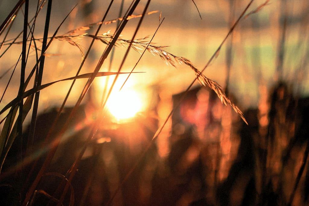 gün batımı ve başaklar
