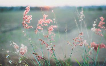 Что такое благодарность и зачем она мне нужна ?